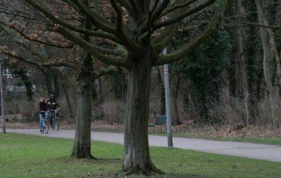 Frau im Vorgebirgspark sexuell belästigt