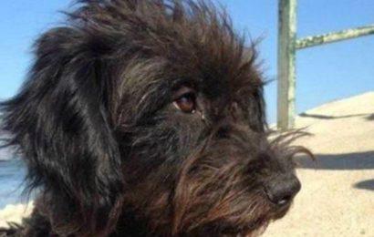Hund rettet Urlauberin vor Vergewaltigung