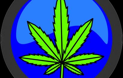 Cannabis Ernteausfall in Berlin