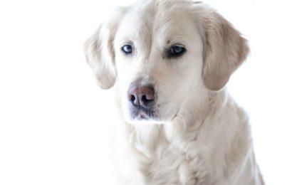 Lebender Hund an Heilig Abend in Kempten angezündet, er verstarb wenig später