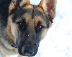 Messerstecherei: Weil ein Syrer einen Hund nicht füttern durfte
